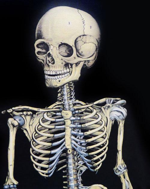 Skeleton Freebie