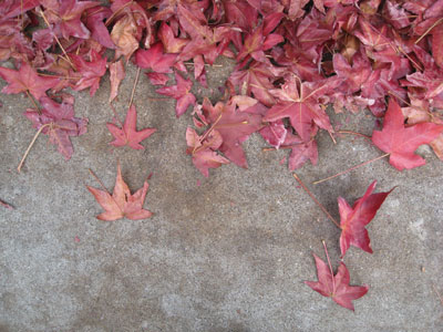 Free Autumn Leaves Photo