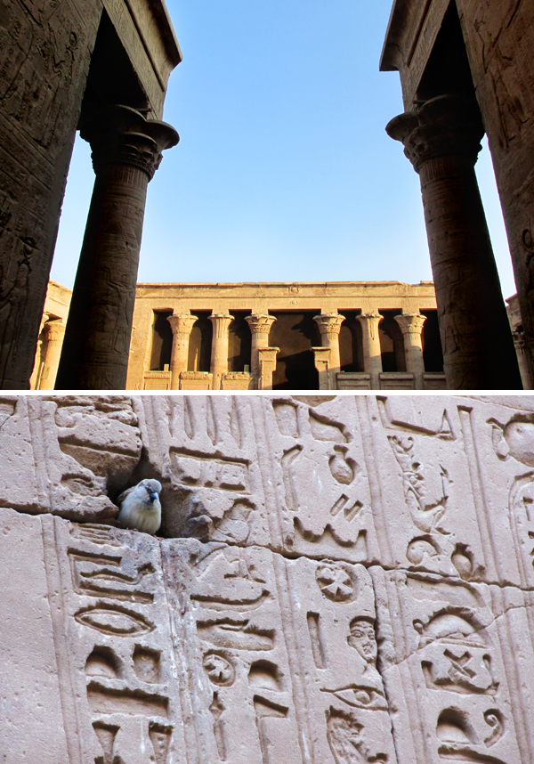 Egypt Temple of Horus Edfu Travel Photo 2, by Sherrie Thai of Shaireproductions