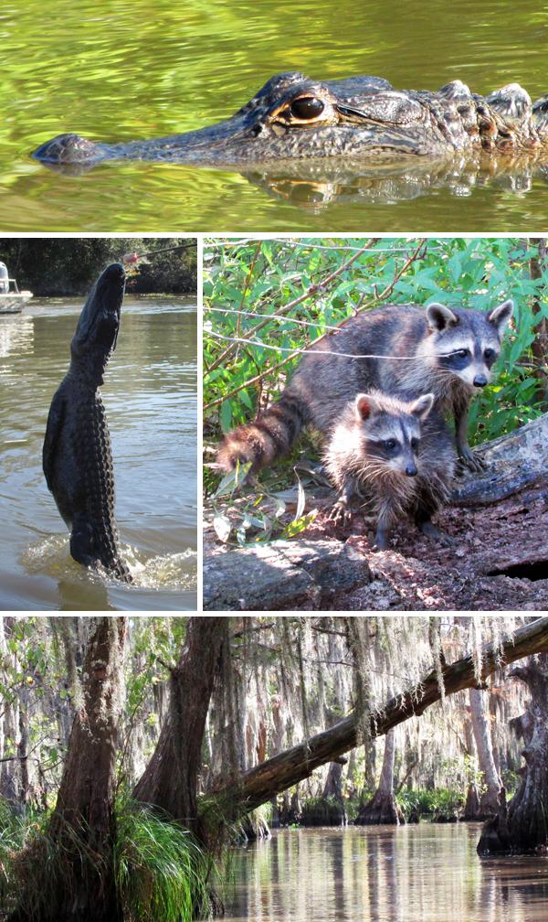 NOLA Honey Swamp Bayou